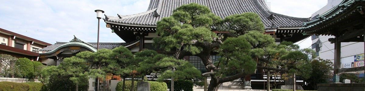 光明寺の黒松