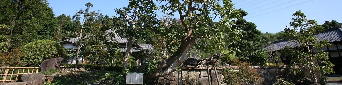 富士見公園の藤棚